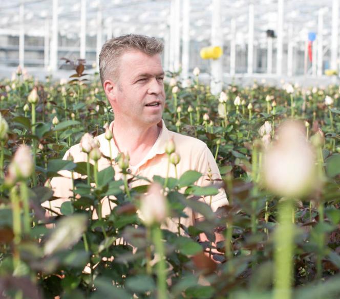 Horticulture: Dutch's Van Den Berg Kenya Ltd Found Guilty Of Stealing Sh1.3B From Poor Kenyans